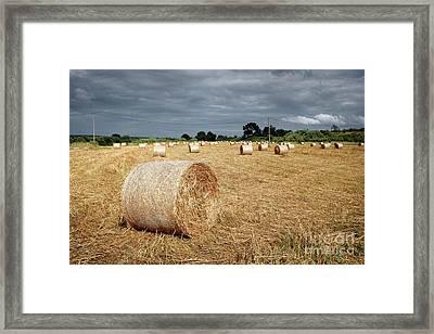 Hay Rolls Framed Print