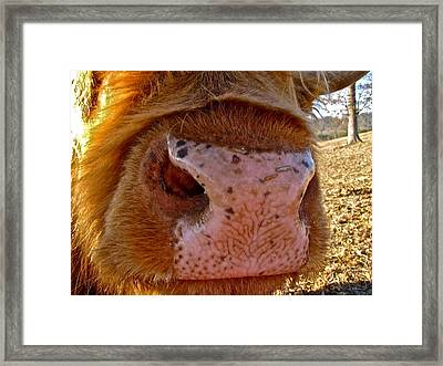 Framed Print featuring the photograph Hay You Smell Good by Lori Miller