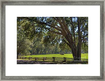 Haybales In The Field Framed Print by Larry Braun