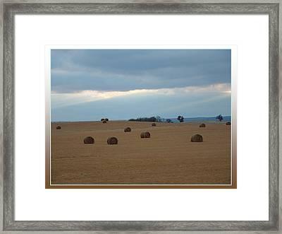 Hayfield In Northwestern Oklahoma Framed Print by Beverly Graham