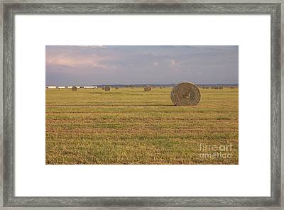 Hayfield Perspective Framed Print