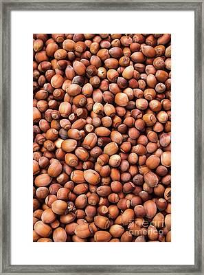 Hazelnuts Framed Print by Svetlana Sewell