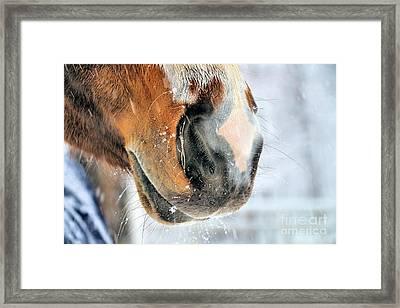 Hazel's Snowy Muzzle Framed Print by Elizabeth Dow