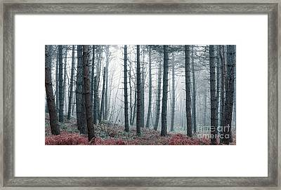 Hazy Air Framed Print by Svetlana Sewell