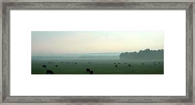 Hazy Grazing Framed Print by Lynn Reid