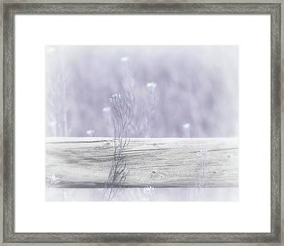 Framed Print featuring the photograph Hazy Lavender Wildflowers by Jennie Marie Schell