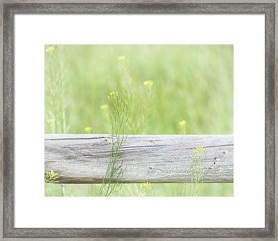 Framed Print featuring the photograph Hazy Yellow Wildflowers by Jennie Marie Schell