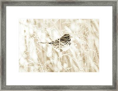 He Feeds The Sparrows Framed Print