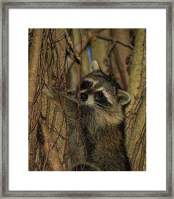 He Found My Nook Framed Print
