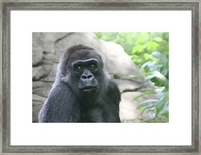 He Is Watching Framed Print by Karol Livote