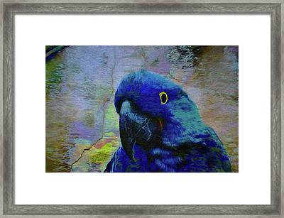 He Just Cracks Me Up Framed Print