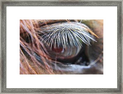 He Knows Framed Print by Lori Mellen-Pagliaro