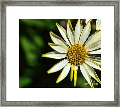 He Loves Me Framed Print by Diana Mary Sharpton