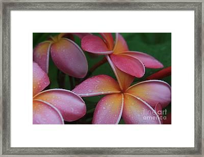 He Pua Laha Ole Aloha Hawaii Framed Print by Sharon Mau