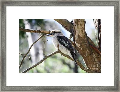 Framed Print featuring the photograph He Sings The Song Of The Bush by Linda Lees