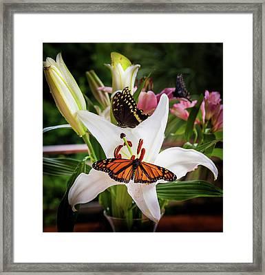 Framed Print featuring the photograph He Still Gives Me Butterflies by Karen Wiles