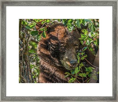 He Was Hiding In A Tree Framed Print