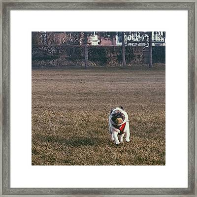 He Was So Happy In The Park Today Framed Print by Natalie Anne