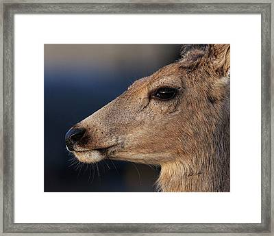 Head Back And Proud Framed Print