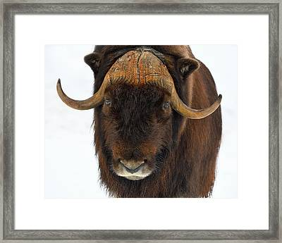 Framed Print featuring the photograph Head Butt by Tony Beck
