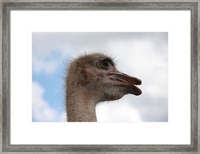 Head In The Clouds Framed Print by Jonathan Kotinek