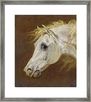 Head Of A Grey Arabian Horse  Framed Print by Martin Theodore Ward