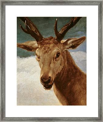 Head Of A Stag Framed Print by Diego Rodriguez de Silva y Velazquez