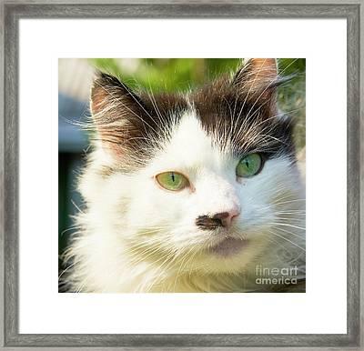 Head Of Cat Framed Print