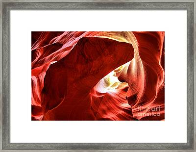 Head Of The Dog Framed Print by Adam Jewell