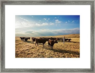 Head Of The Herd Framed Print by Todd Klassy