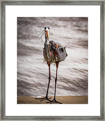 Head On To A Heron Framed Print by Jean Noren
