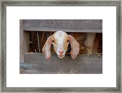 Head Shot Framed Framed Print