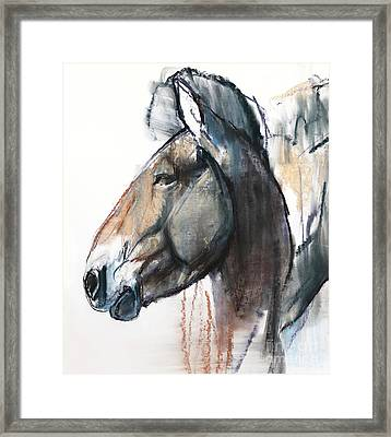 Head Study, Przewalski Framed Print by Mark Adlington
