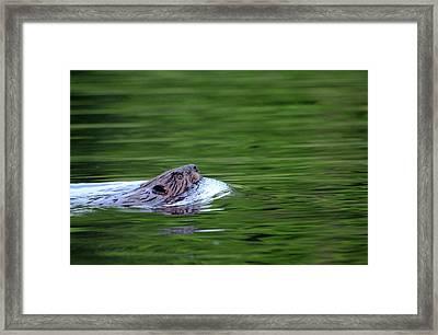 Heading Home Framed Print by Debbie Oppermann