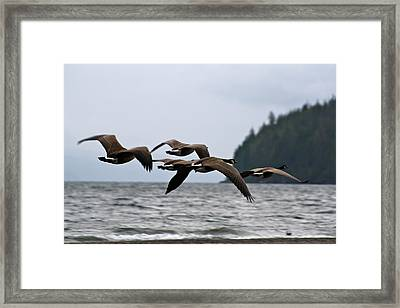 Framed Print featuring the photograph Heading South by Cathie Douglas
