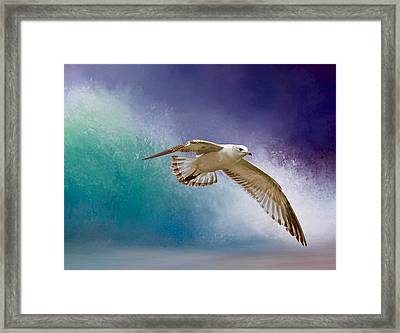 Heading To Shore Framed Print by Donna Kennedy