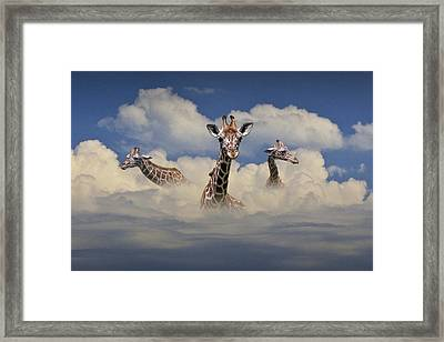 Heads Above The Clouds Framed Print