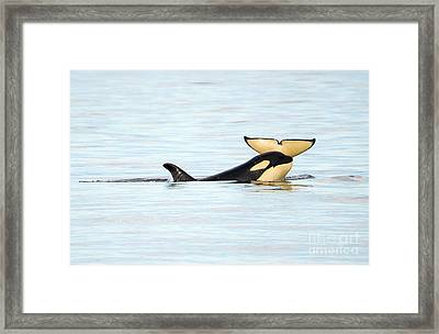 Heads Or Tails Framed Print by Mike Dawson