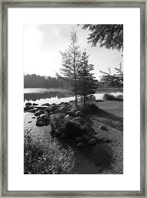 Headwaters Pine Framed Print by Christopher J Franklin
