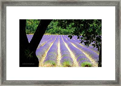 Healing Fields Of Lavender Framed Print