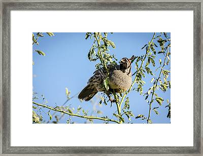 Healthy Eating Framed Print by Emily Bristor