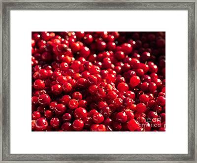 Healthy Pile Of Lingonberries Framed Print