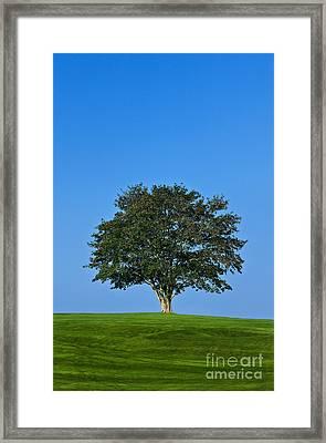 Healthy Tree Framed Print by John Greim