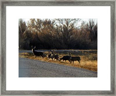 Heard Of Deer Framed Print