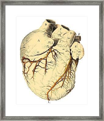 Heart Anatomy, 18th Century Framed Print by