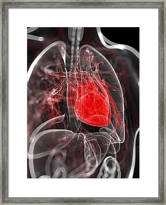 Heart Anatomy, Artwork Framed Print by Sciepro