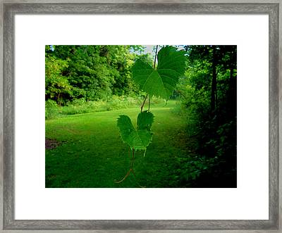 Heart And Butterfly Framed Print
