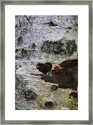 Heart Carved In Tree Framed Print