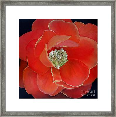 Heart-centered Rose Framed Print