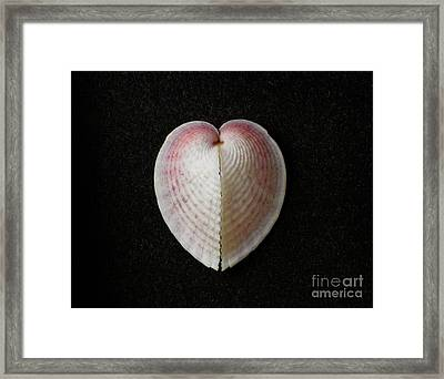 Heart Cockle Framed Print by English School